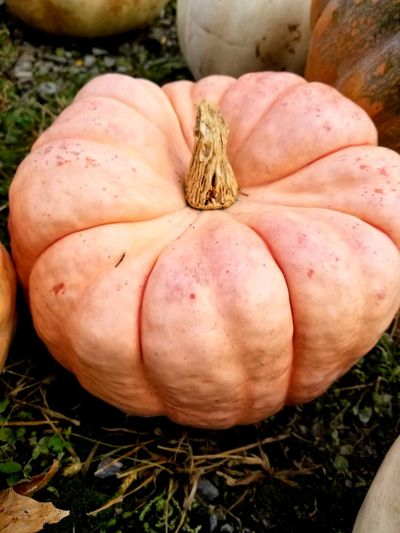 Pumpkin Fruit Rotting Autumn Vegetable Agriculture Close-up Grass Food And Drink