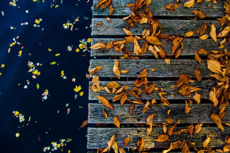 High angle view of leaves on wood
