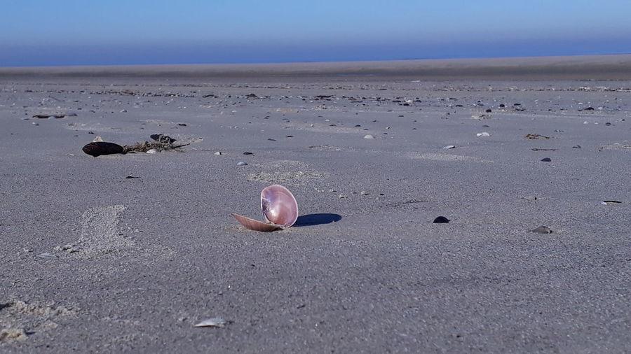 Surface level of shells on beach against sky
