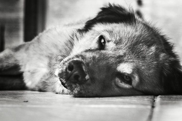 Old dog Animal
