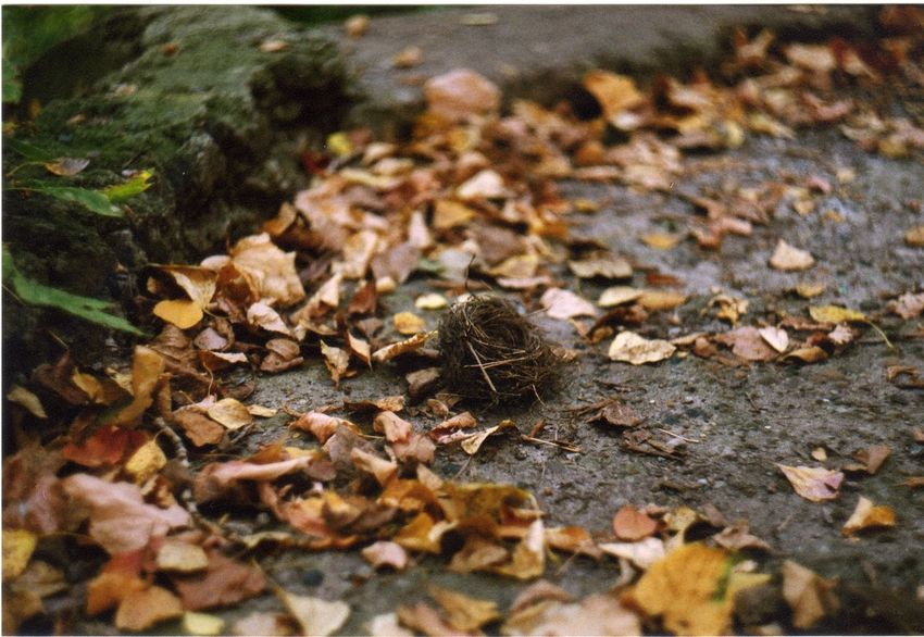 35mm Abundance Autumn Beauty In Nature Change Close-up Day Fallen Falling Focus On Foreground Fragility Grass Ground Leaf Leaves Natural Pattern Nature No People Outdoors Season  Selective Focus Surface Level Tranquility
