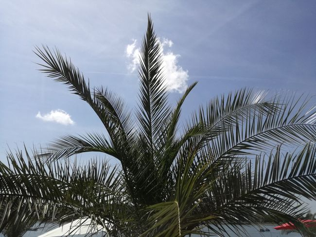 Plant No People Day Sky Outdoors Palm Tree Nature Tree France Summer Time  Summer Vacations Water Lac Lake View Lake