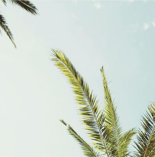 Palm Tree Tree Nature Sky Beauty In Nature Outdoors First Eyeem Photo