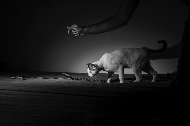 BlindCat Cat Blinky Black & White Pet Portraits Pet Portraits