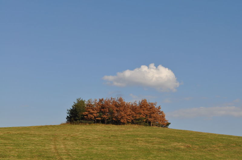 Set of trees on a hill Sky Plant Land Cloud - Sky Tranquil Scene Grass Environment Field Tranquility Day Beauty In Nature Scenics - Nature Nature No People Landscape Tree Growth Non-urban Scene Copy Space Blue Outdoors Trees Landscape Trees On Hilltop Trees