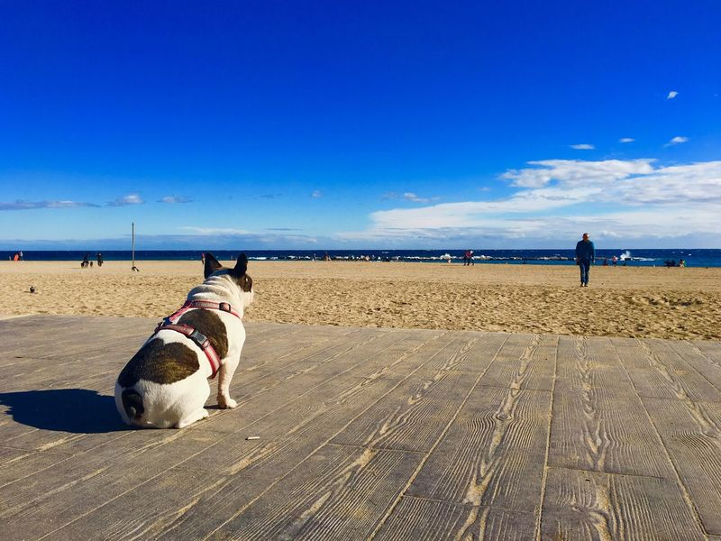 Dog Barcelona Coastline Waterfront Shore Dogs Dog And Owner Dog And Sea Sky And Clouds Sky And Sea