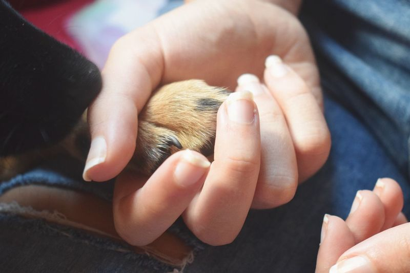 Close-up of hand holding dog paw