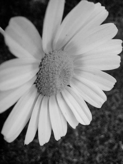 Blackandwhite Photography Flower