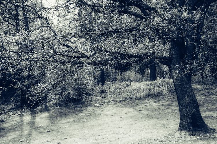 View of trees on field in forest