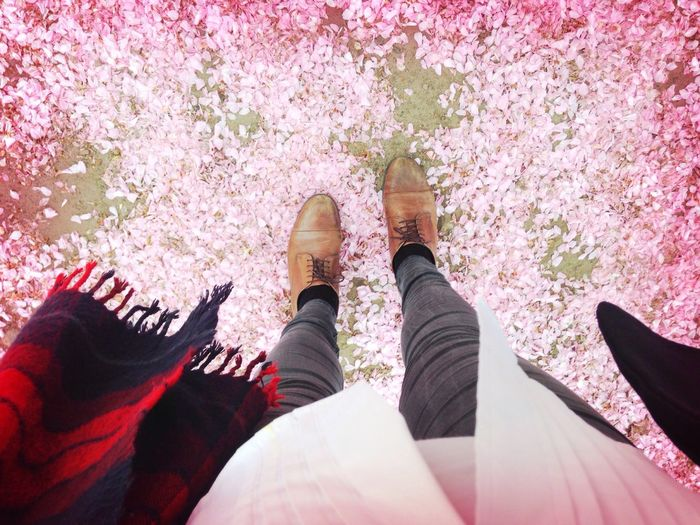 Low section of people standing by pink flowers