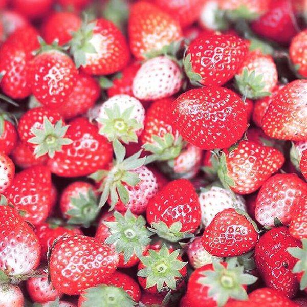 ความสด อร่อย ที่ไม่คงทน Strawberry Strawberries Sweet Red Fresh Monjam Chiangmai Th Thailand