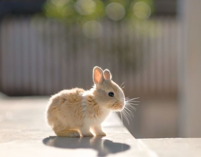 Cute rabbit on retaining wall during sunny day