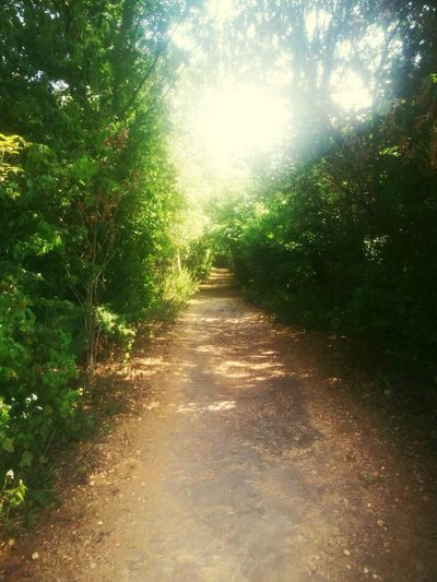 🌳 walk the path that you choose 💫 Sunny Summer Tree Sunlight Shadow Pathway Long Walkway Woods