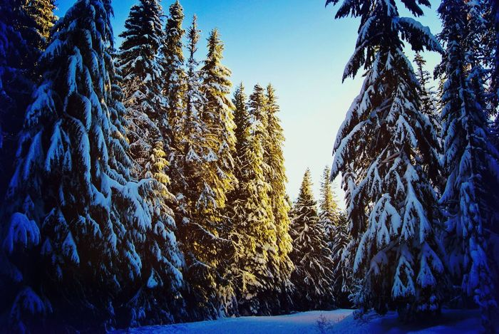 Magical wintery picture on Mt Hood. Love the light. Winter Snow Snow Covered Trees Day Sunlight, Shades And Shadows Been There, Done That EyeEm Best Shots Snow Day Landscape Photography EyeEm Selects