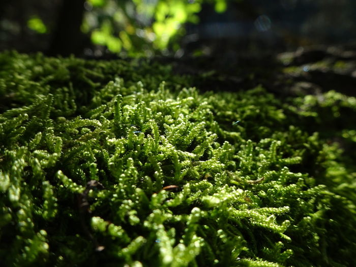 Moss Poland Poland Nature September Fall Light Silence Of Nature Plant Green Color Growth Freshness Nature No People Beauty In Nature Day Outdoors Close-up