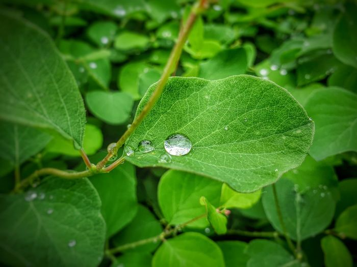 Close-up of wet green leaves