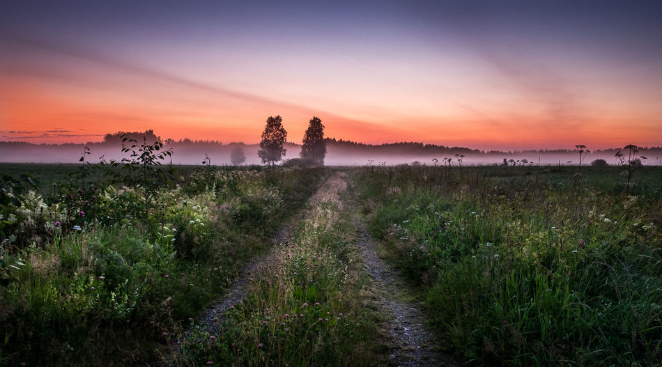 Midnight magic Beauty Bright Colors Country Countryside Field Flowers Fog Foggy Grass Landscape Light Midnight Misty Nature Night Nightphotography Outdoors Path Plants Sky Summer Sun Sunset Tree