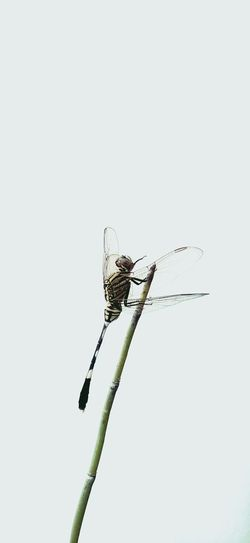 Lonely #Dragonfly #insect #alone #animal Animal Themes