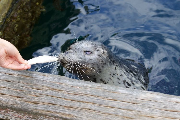 Close-up of hand feeding seal