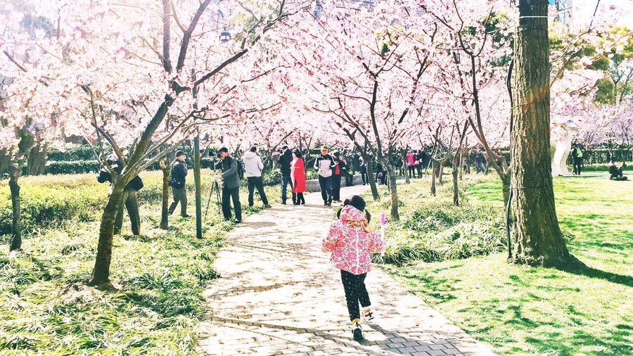 A girl in cherry blossoms Tree Park - Man Made Space Real People Nature Outdoors Pink Color Cherry Blossom Day Childhood Flower Beauty In Nature People Blooming Abundance