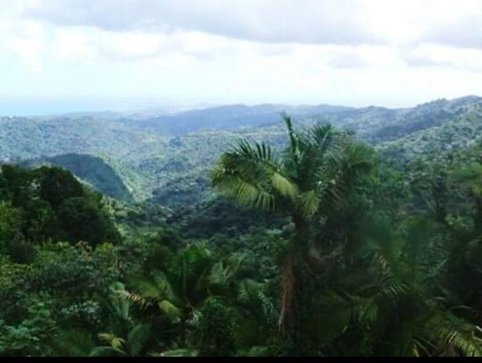 Taking Photos Check This Out Puerto Rico Enjoying Life Tower Beautiful Sanjuan Jungle Amazing View Love