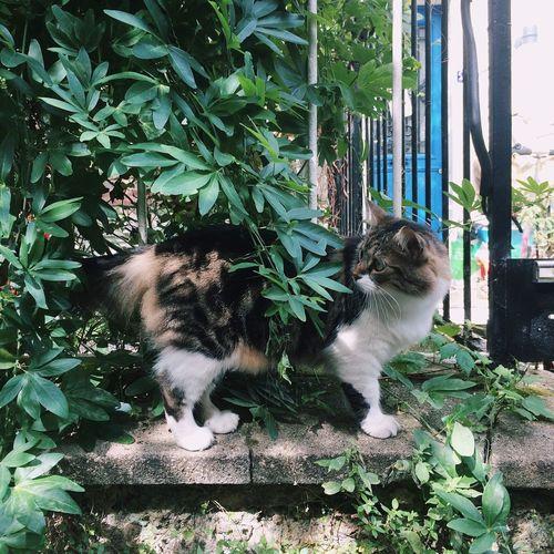 Travel Destinations Feline Domestic Animals Domestic Cat Pets One Animal Plant Cat Nature Animal Themes