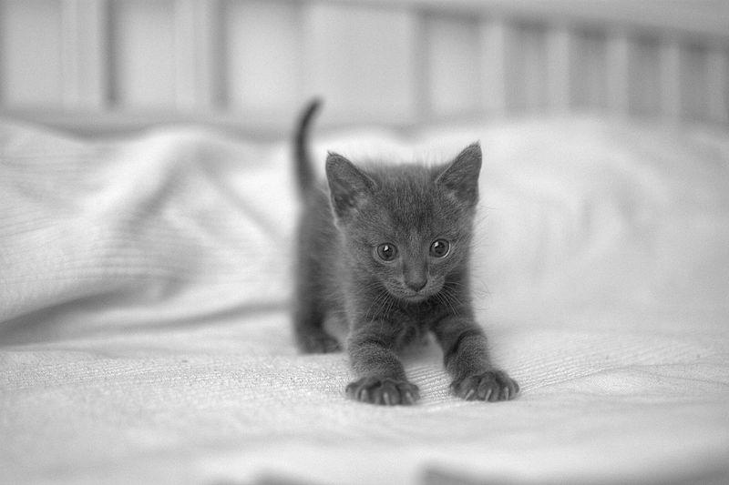 Cute black kitten on bed
