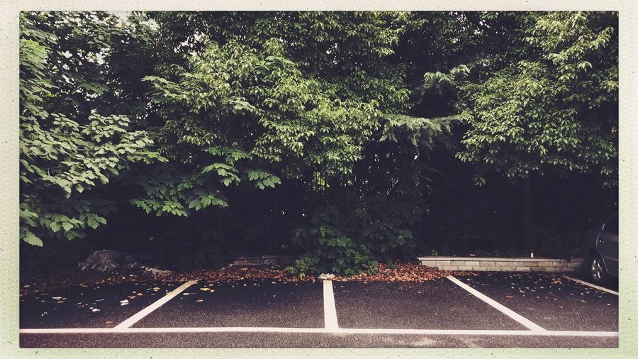 Streetphotography Plant Tree Transfer Print Growth Auto Post Production Filter Nature No People Day Outdoors Architecture Tranquility Beauty In Nature Green Color Transportation Built Structure Road Land Absence Lush Foliage