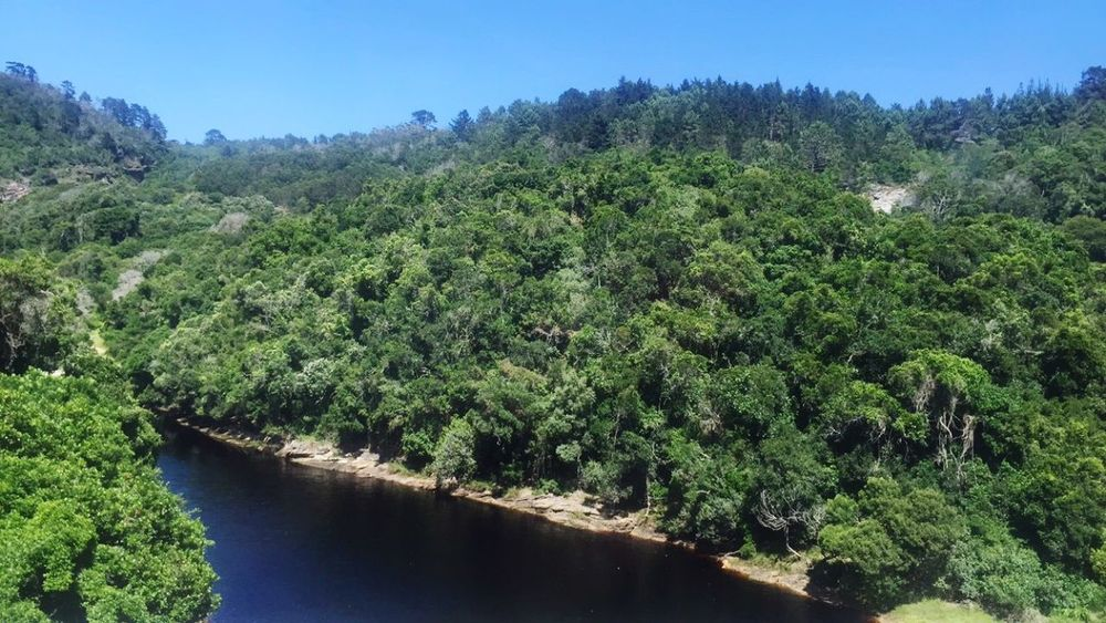 Trees Knysna Snapshots Of Life South Africa Nature Water Holiday Life Beautiful