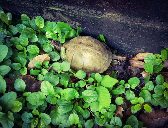 High angle view of snail on plant