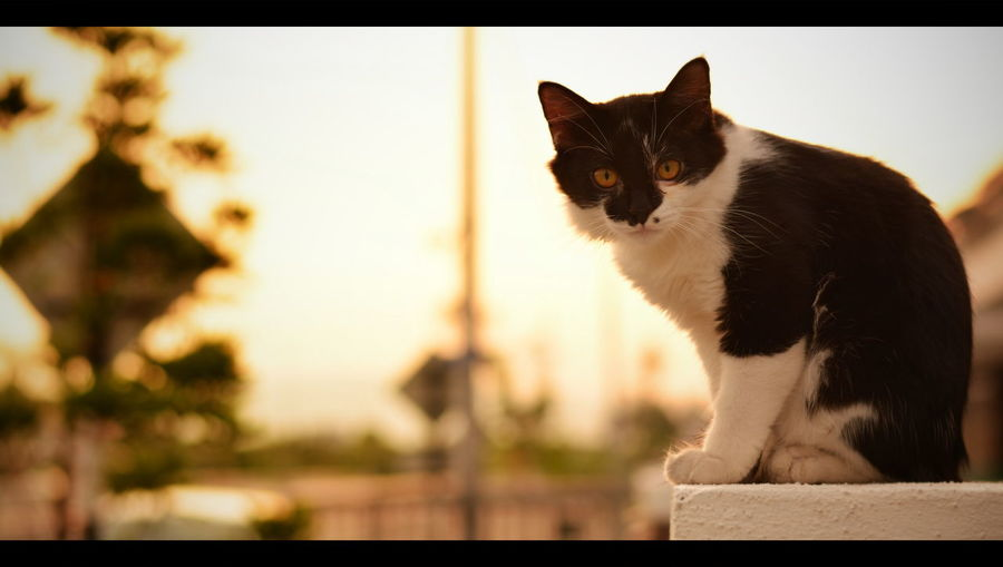 This is kim .. :) Mycat Cats Animallovers EyeEm Best Shots