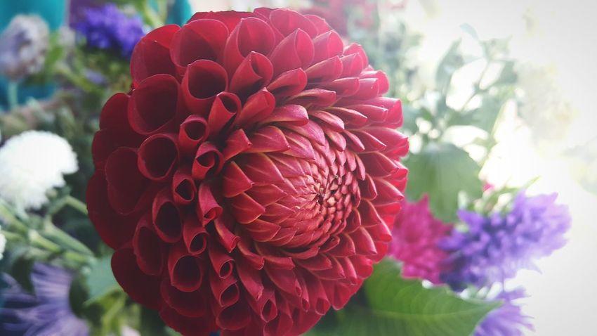 Flower Petal Plant Flower Head Nature Red Blossom Freshness Beauty In Nature Freedom Reshasuper