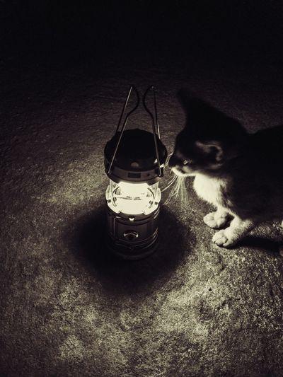 EyeEmNewHere Dark Photograph Smartphone Photography Darkphotography Night Lamp Curious Pet EyeEmNewHere Cat HUAWEI Photo Award: After Dark