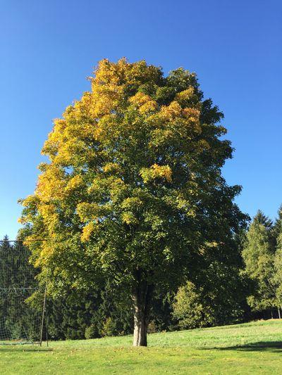 Herbstlaub Nature Natural Natural Beauty Tree Fichtelgebirge