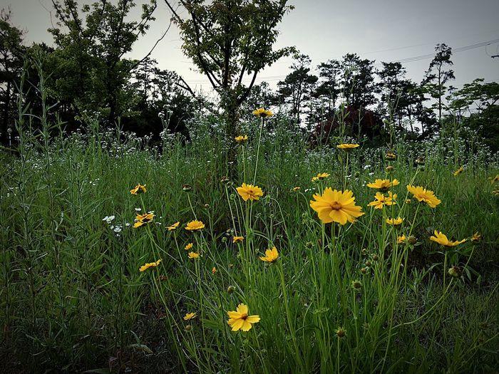 여름에 피는 꽃... ㄱ,여름, ㅇ름다움 Flower First Eyeem Photo
