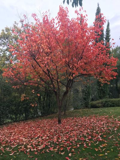 Autumn Nature Beauty In Nature Change Tree Leaf Flower