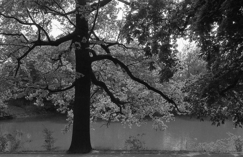 Wooden veins. 35mm Film Beauty In Nature Black And White Branch BYOPaper! CHM Universal 400 Exakta 3.5-4.5/35-70mm Film Photography GroßerGarten Tranquil Scene Tree Water