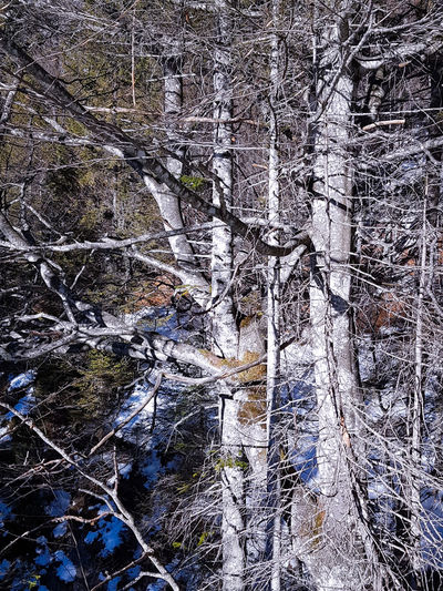 Val Zemola Hiking High Contrast Trees Tree Textures Mountains Backgrounds Full Frame Abstract Pattern Textured  Close-up No People Day