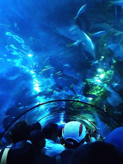 Togetherness Blue Aqua Aquarium Vacation Seaworld Fish Dolphin Nature Swimming Underwater Adventure Leisure Activity Travel Destinations Jakarta Date