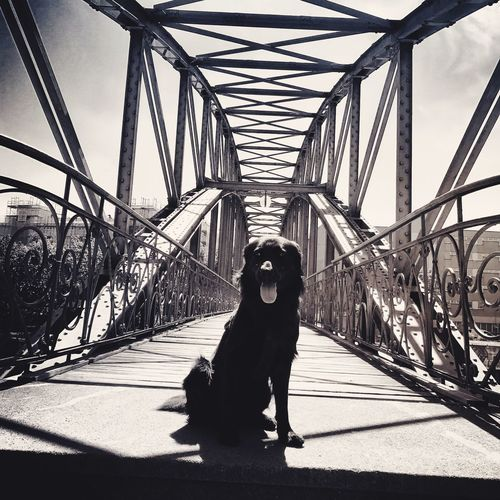 You shall not pass Gallagher Berlin One Animal Dog Pets Animal Themes Domestic Animals Bridge - Man Made Structure first eyeem photo
