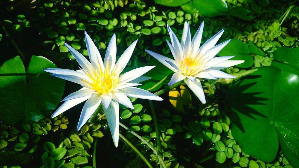 Relaxing Enjoying Life Flower Flowers Nature_collection Nature First Eyeem Photo Zagreb Croatia EyeEm Nature Lover A New Beginning