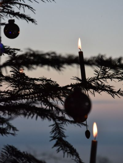 Cristmas Trees Candels Candellight Cristmas Tree Cristmas Time♥ Light Green Decoration in Heiden Appenzell-Winter-2015 Lake Of Constance Nice Hello World
