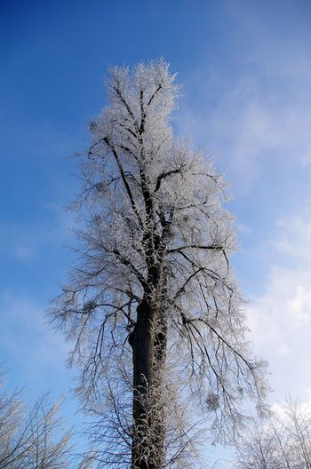 Winter Trees with Hoar Frost in Poland Bare Tree Bare Trees Beauty In Nature Blue Sky Day Frost Frozen Hoar Frost Ice Nature No People Outdoors Poland Polska Sky Snow Sunny Day Tree Trees, White Winter