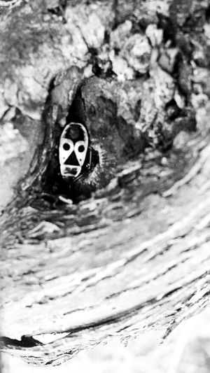 Hanging Out Nature Blackandwhite Animal Black And White Macro Photo Black & White TheMinimals (less Edit Juxt Photography) Insects  Vines Vineyard Shootermag AMPt - Shoot Or Die
