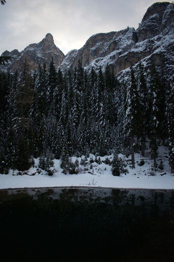 Trees, Pragser Wildsee Mountain Winter Snow Nature Beauty In Nature Cold Temperature Tranquil Scene Tree Trees Lake first eyeem photo