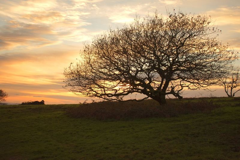 Lone Sunset Field Beauty In Nature Isolated Landscape Grass Nature Tranquility Bare Tree Tree Sky Outdoors No People