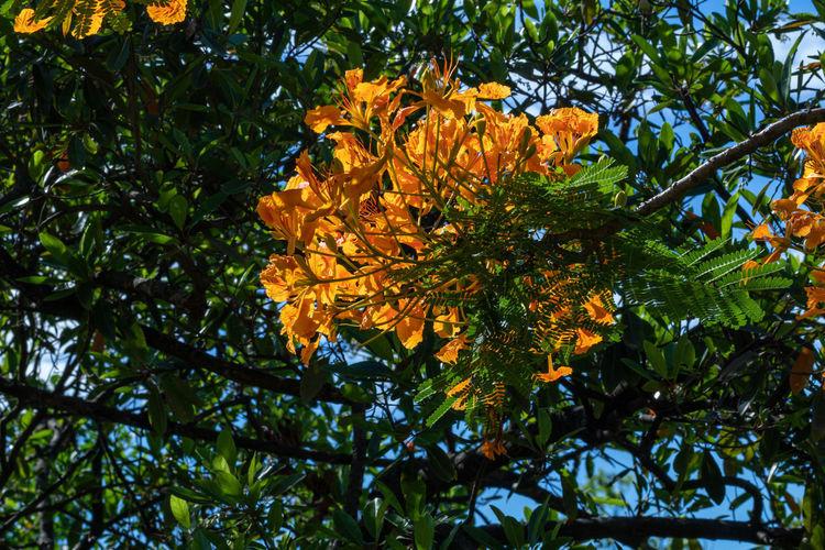Low angle view of orange flowering tree