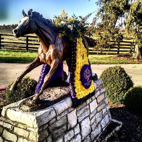 Showing off the Wins at RamseyFarm Breederscup Keeneland Stephanieskitten Kittensjoy Selfie October Autumn Likeforlike Kentucky  Fall Farms Selfies Autumnleaves Farmlife Like4like Fallingleaves Farm Horserace Thoroughbred Bc15 Horsefarm