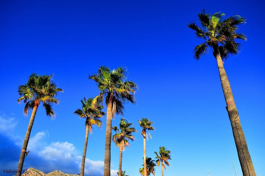 Where I would rather be Palm Tree Tree Blue Nature Clear Sky Outdoors Palma De Mallorca Travel Destinations Holiday