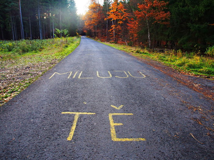 Text on road by trees